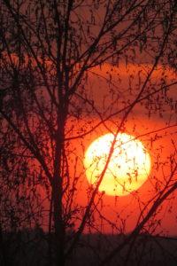 Sonne im März